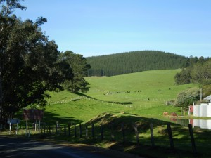 Redgum Hill - Nannup Road