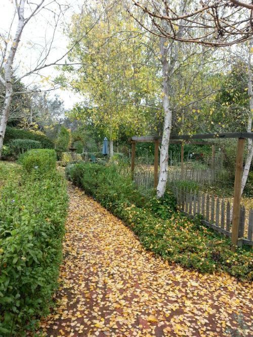 Autumn Garden 2013-