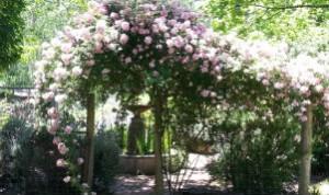 Redgum Hill Country Retreat garden
